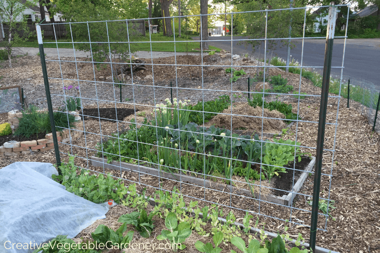 Creative Vegetable Gardener How To Build An Easy And Beautiful