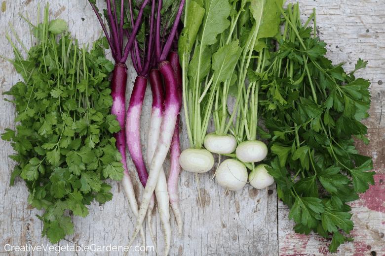 fall garden harvest of vegetables