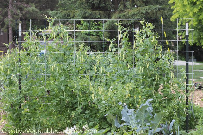 easy garden trellis