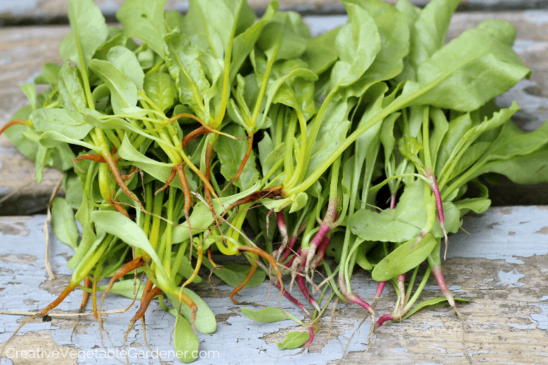 thinning fall beets