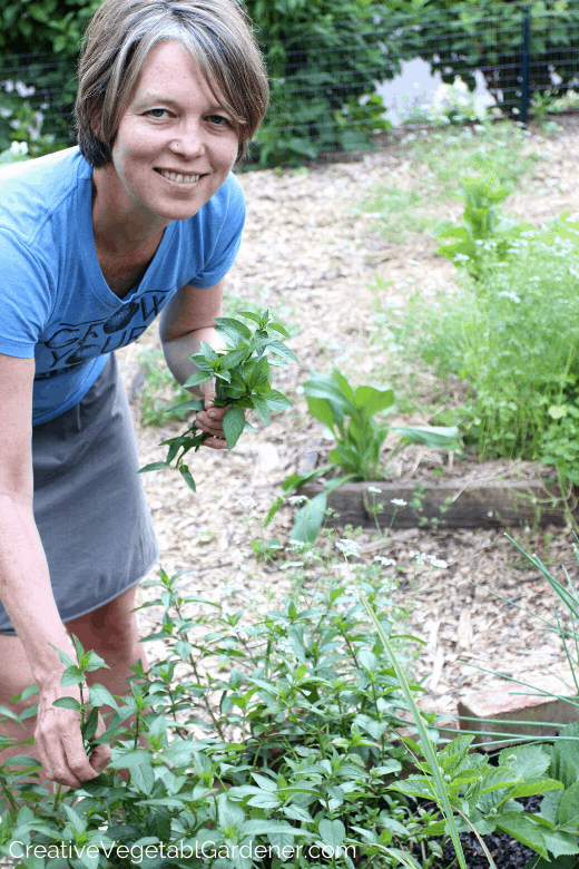 picking mint for food storage