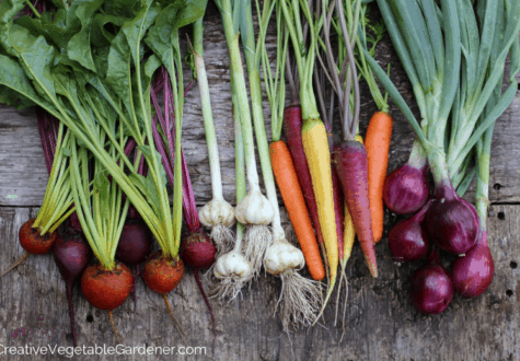 garden harvest for food storage