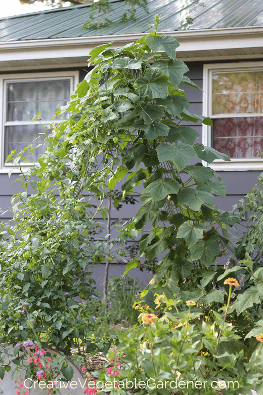 easy vegetable garden trellis
