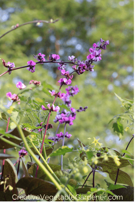 flowers for vegetable garden trellis