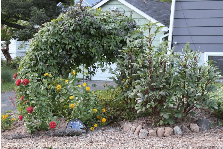 trellis in vegetable garden