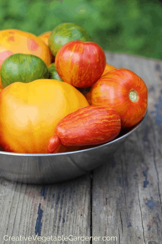 tomato harvest for preserving