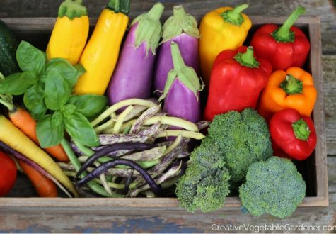 Colorful vegetable garden harvest