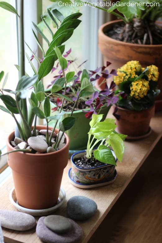 house-plant-makeover