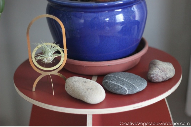 plant in pot with rocks
