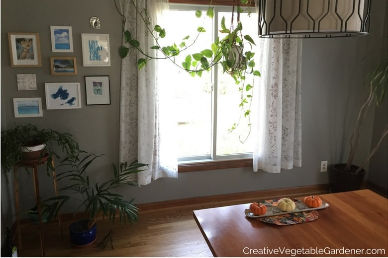 dining room with plants before makeover