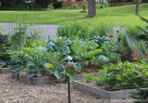 vegetable garden in summer with best gardening podcasts