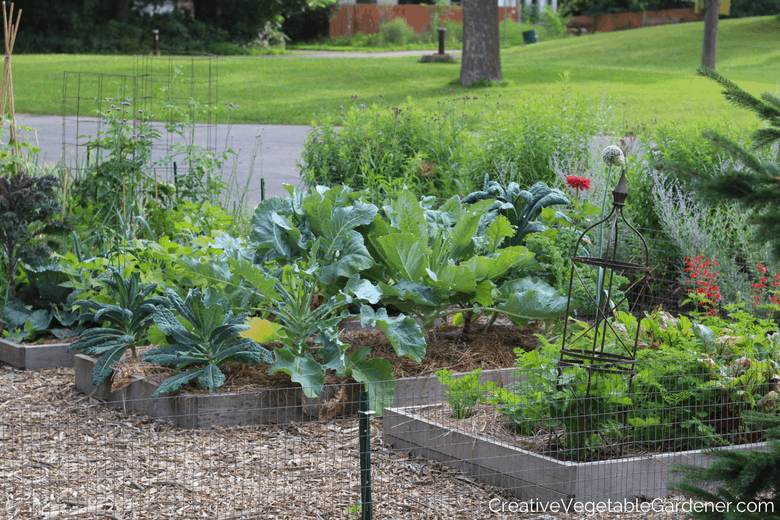 vegetable garden in summer