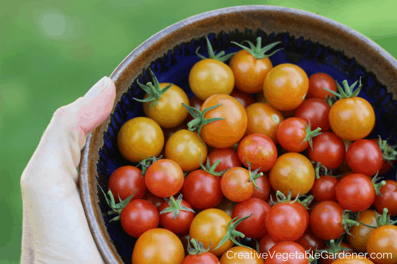 bowl of tomatoes from garden illustrating favorite gardening podcasts