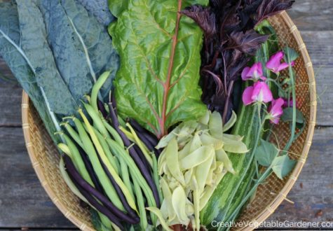 basket of garden harvest vegetables