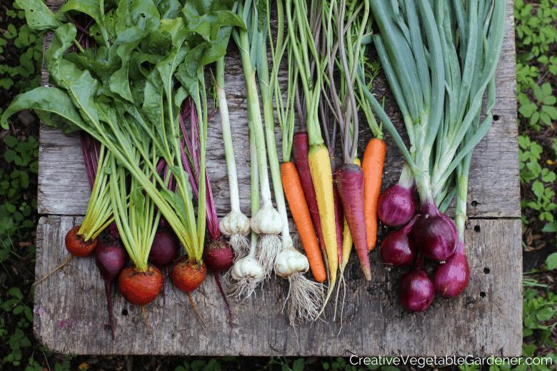 garden harvest of beets, garlic, carrots, onions what varieties to grow in garden