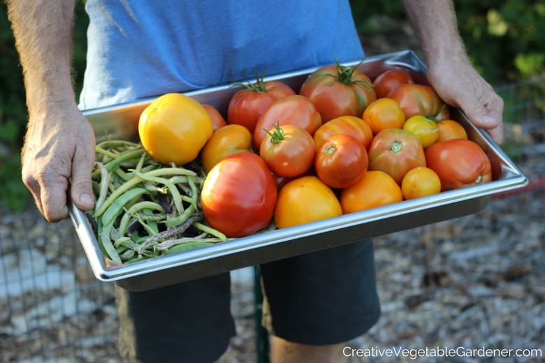 man holding harvest of tomatoes and beans