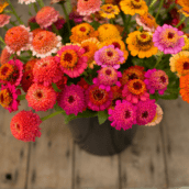 5 Fabulous Cut Flowers for Your Garden
