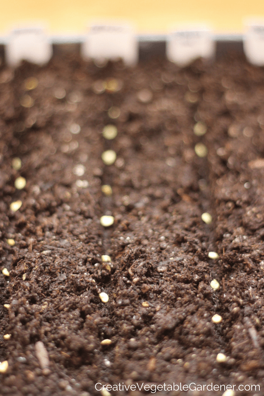 pepper seeds in soil and seed starting resources