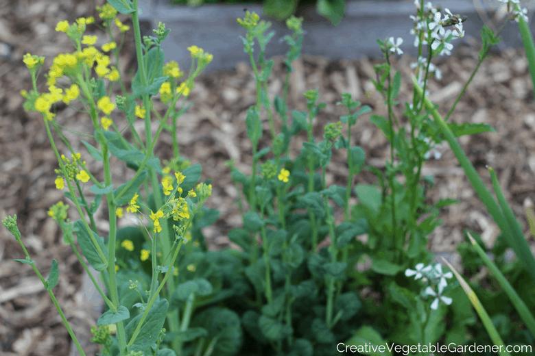 flowering vegetables