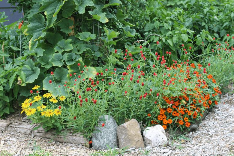 cut flowers in the vegetable garden