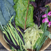 The ultimate guide to the best vegetables to plant in spring