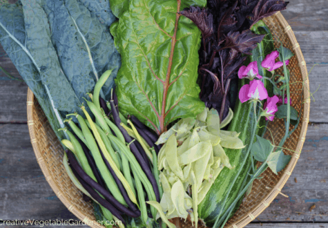 when to plant spring vegetables