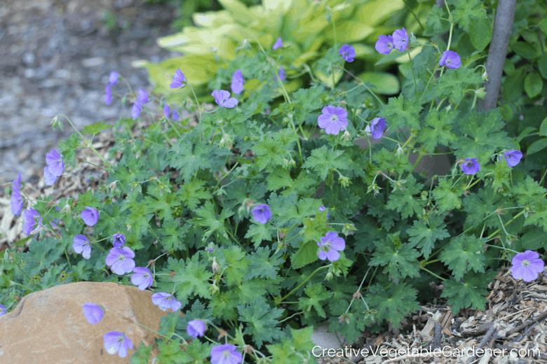 Creative Vegetable Gardener Gorgeous Summer Blooming