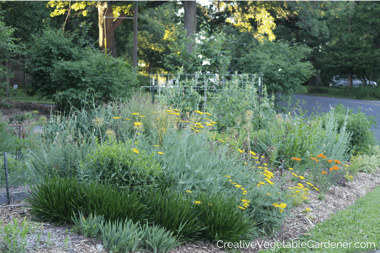 summer blooming perennials in the garden