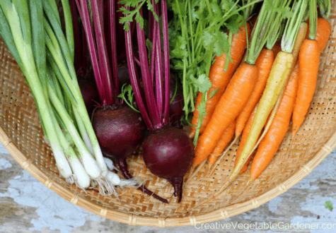 vegetable harvest from growing a fall garden
