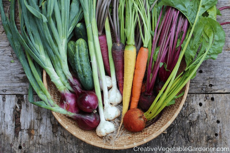 fall vegetable harvest for cooking