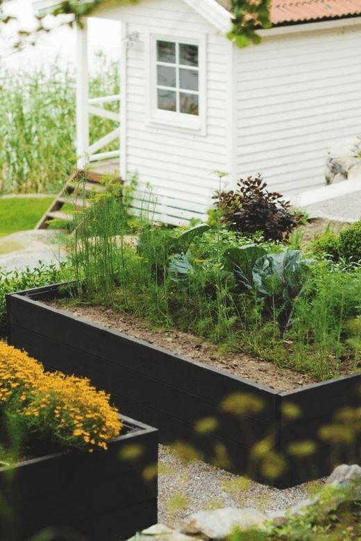dark raised beds photos of vegetable gardens