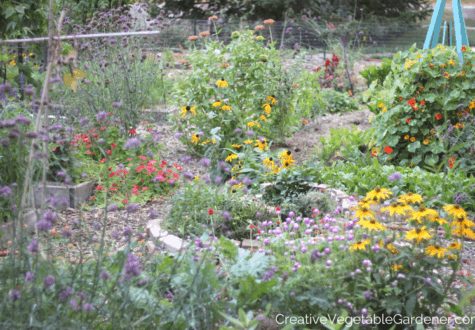 colorful home vegetable garden photo