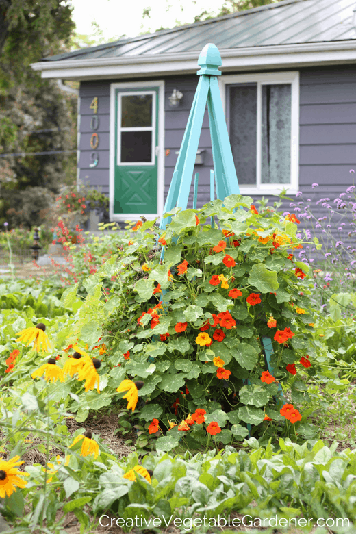 photo of front yard vegetable garden