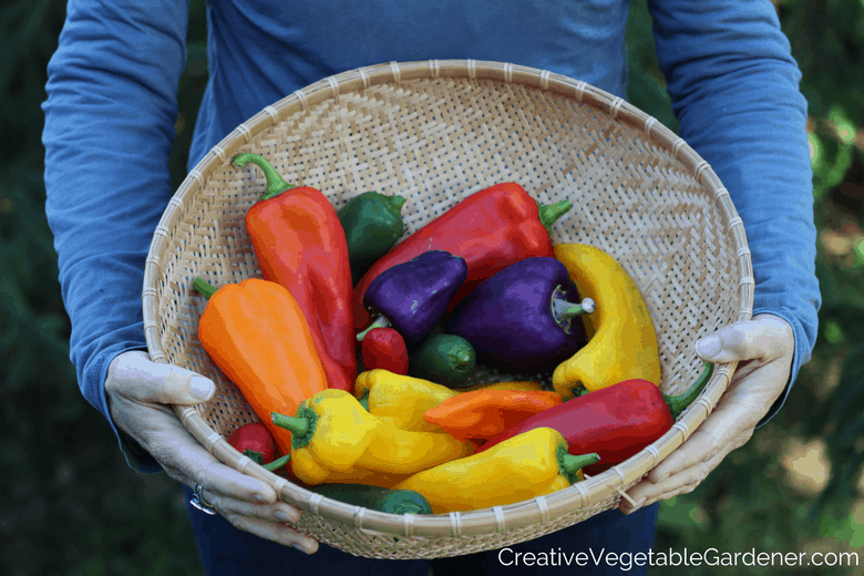 colorful pepper harvest and the importance of our gardens