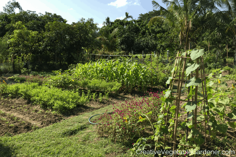 thai vegetable garden