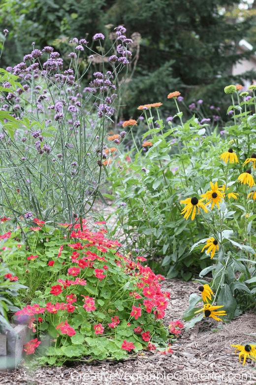 flowers in an organic vegetable garden