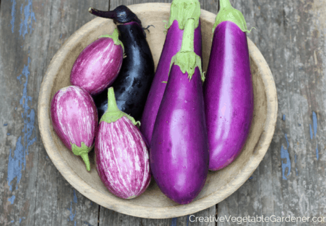 purple eggplant to grow in garden