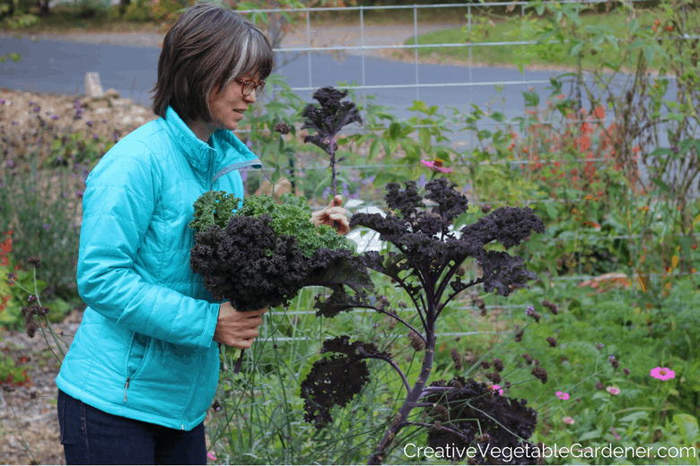 redbor kale and a list of purple vegetables to grow in your garden