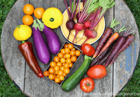 colorful harvest from an organic vegetable garden