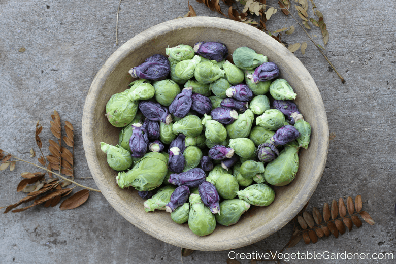 purple vegetables to grow in your garden brussels sprouts