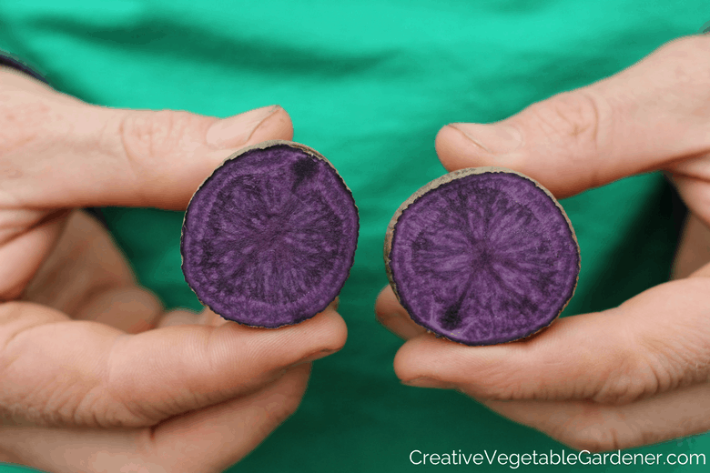 purple potatoes from the garden