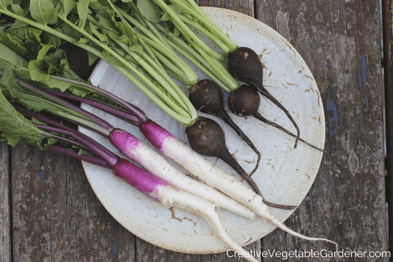 vegetable harvest from an organic garden