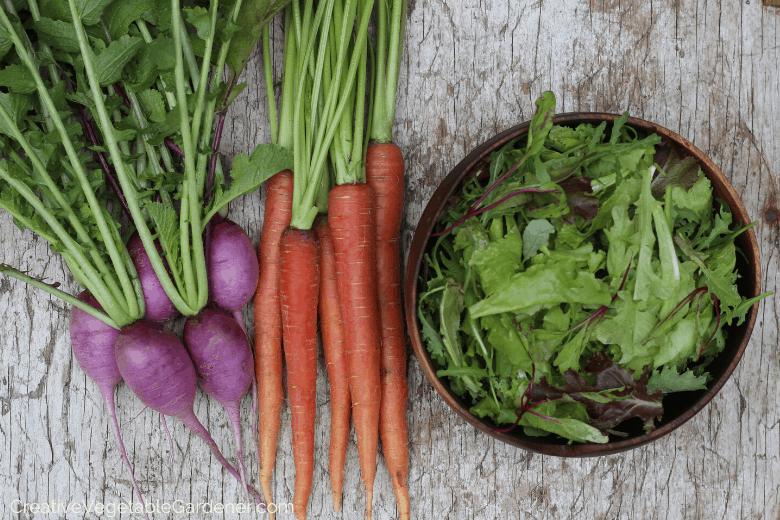 vegetable garden harvest of radishes, carrots, salad