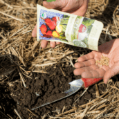 How to Grow More Food with a Custom Planting Schedule