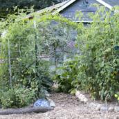 Why you should be fertilizing your organic garden