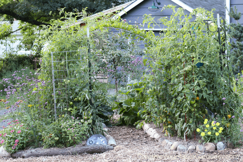 Creative vegetable gardener why you should be fertilizing - When to fertilize vegetable garden ...