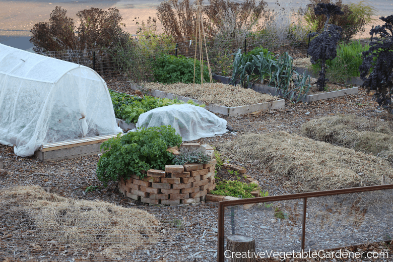 the garden after a frost