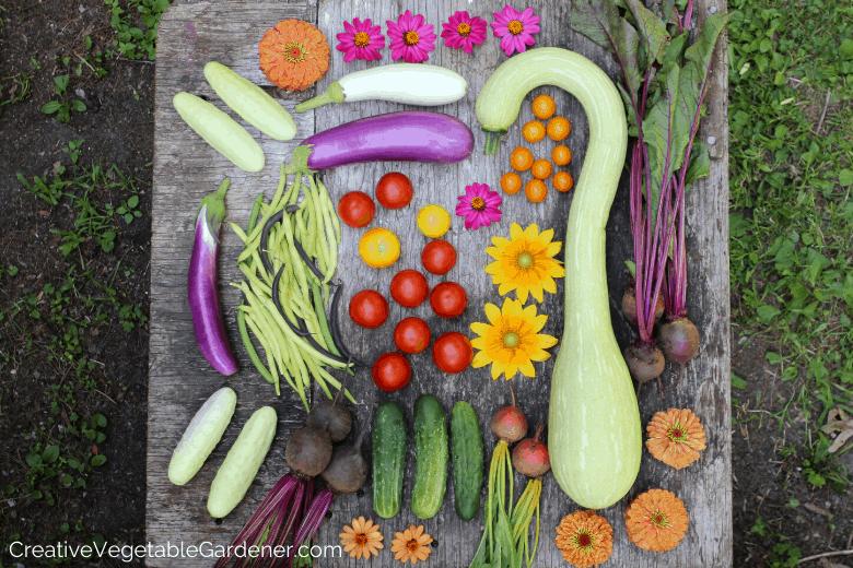 vegetable harvest from garden