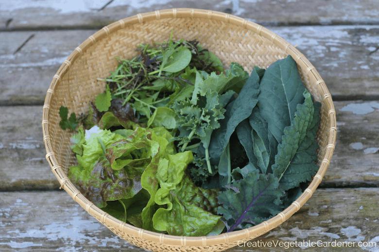 Creative Vegetable Gardener 15 Incredibly Useful Garden Tools You