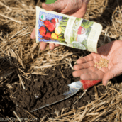 How to Know When to Sow a Seed or a Plant in Your Garden